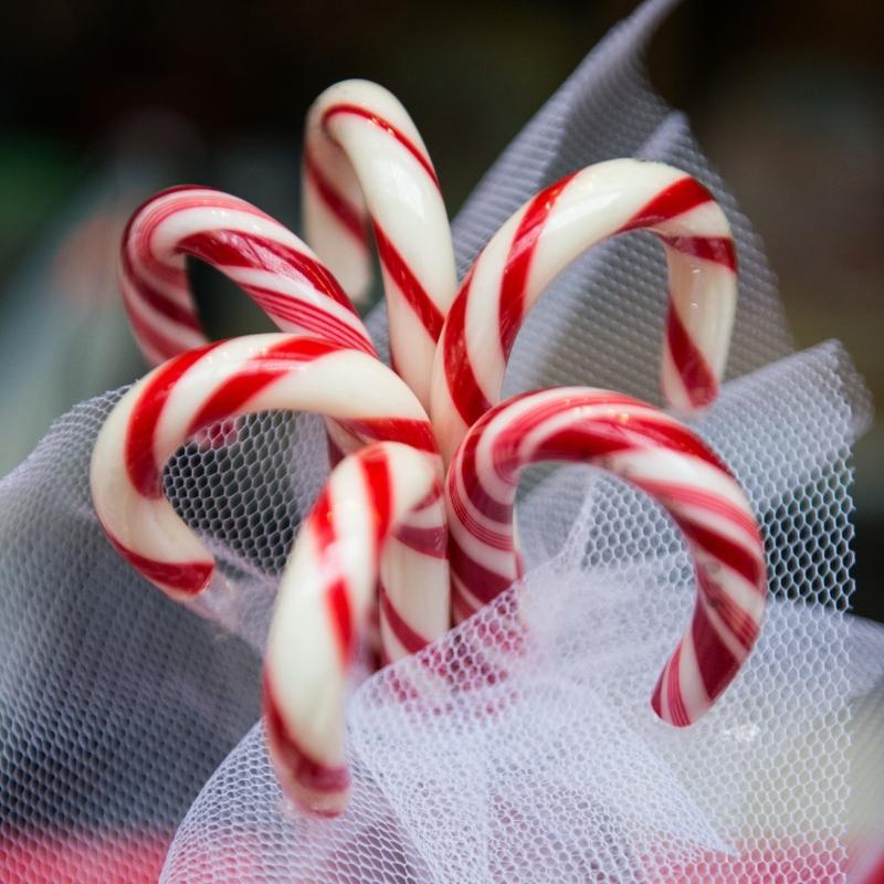 Catégories de Noël, cannes à sucre, tradition, fêtes de Noël, authentique.